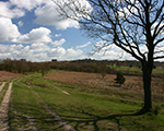 Ashdown Forest & Visitor Centre